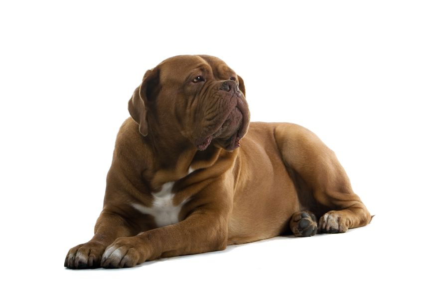 Petplan Veterinarian Jules Benson On 4 Causes Of Sudden Weakness