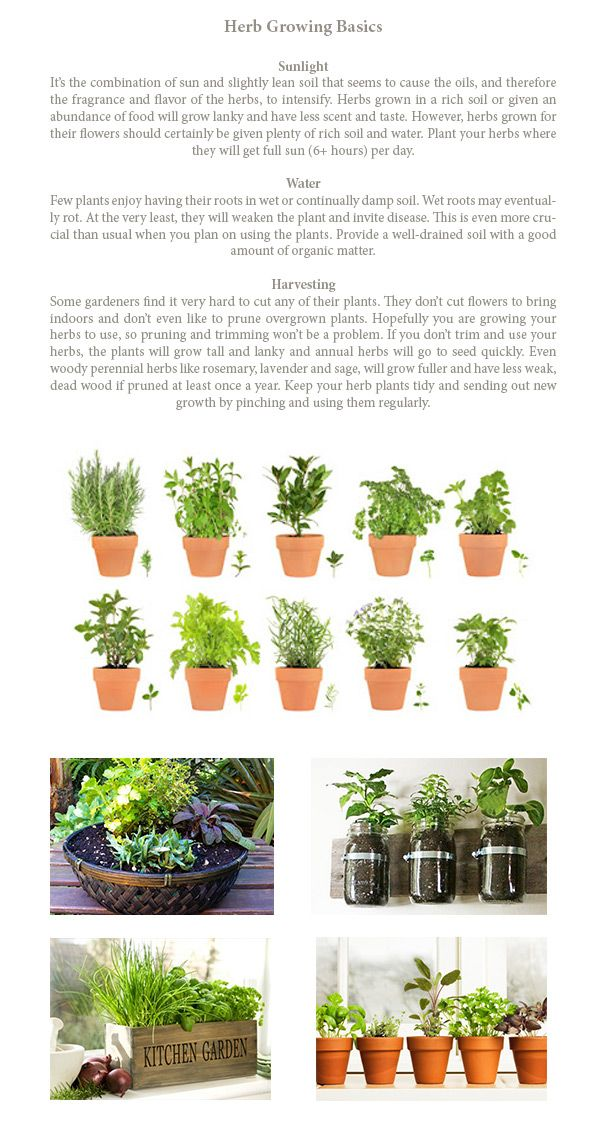 Growing Fresh Herbs for Grilling is easy- | {Grilling} | Diy