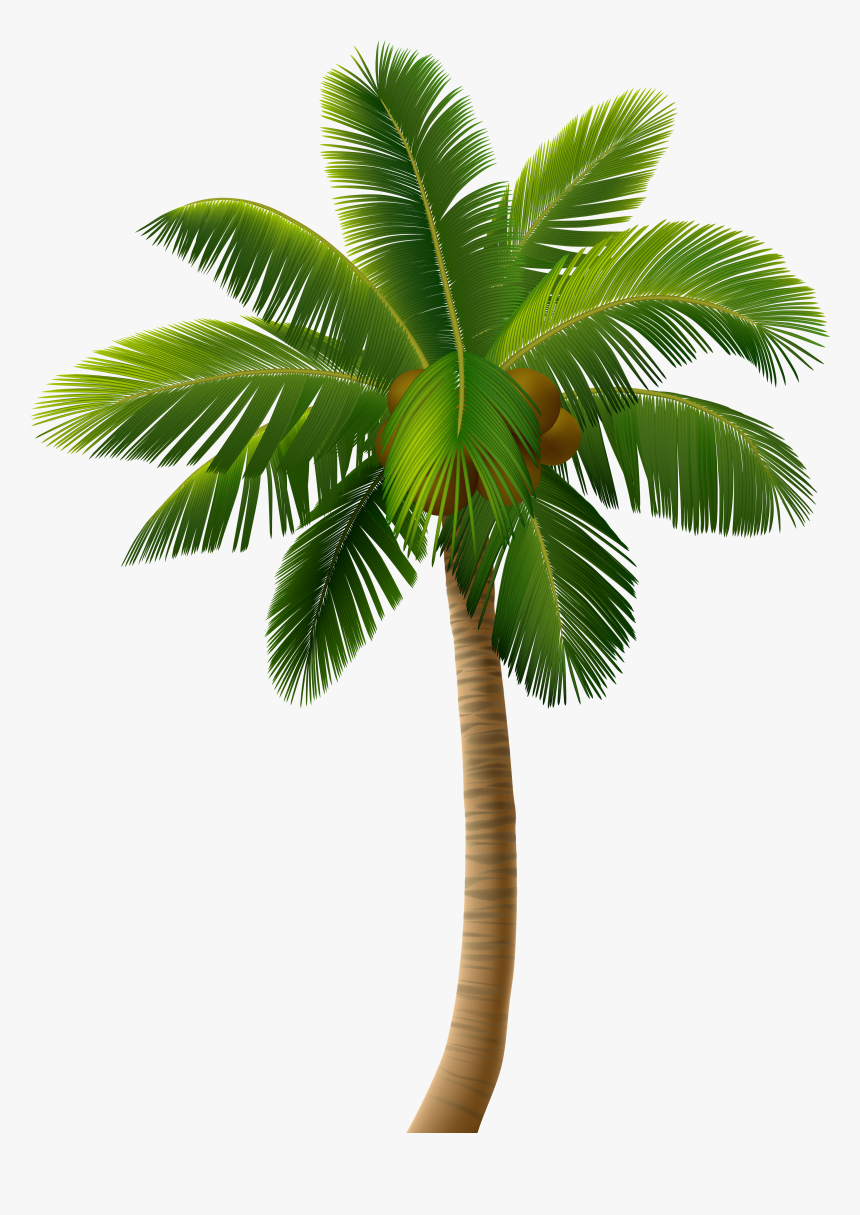 Pin By Linda Brown On Palm Palm Tree Pictures Palm Tree Png Tree Illustration