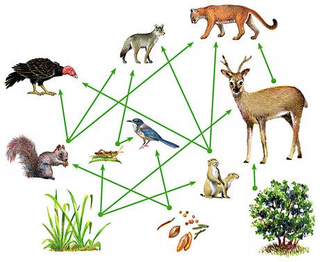 Food Webs The Energy And Nutrient Connections In Nature Are More