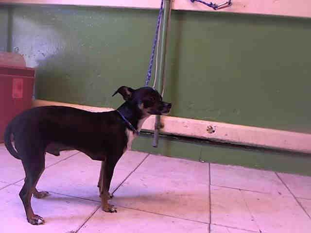 Craigslist Los Angeles County Pets