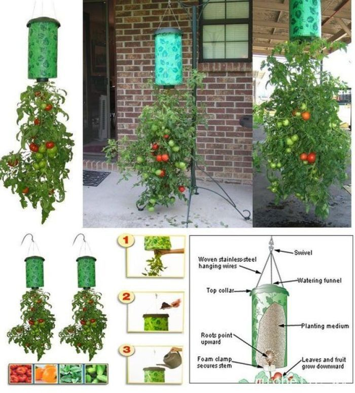 "Growing tomatoes as you didnt know – ""upside down"". With these instructions you can grow them even on the balcony"
