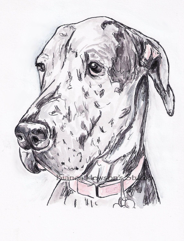 Noble Great Dane Dog Merle Watercolor And Ink Original Art