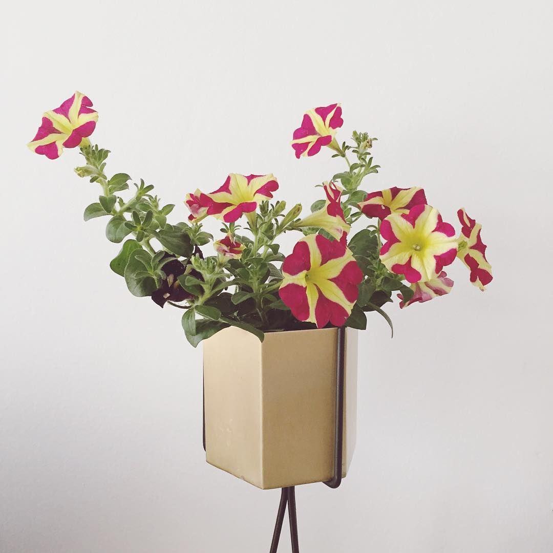 ferm LIVING Plant Stand and Hexagon pot in large httpwww