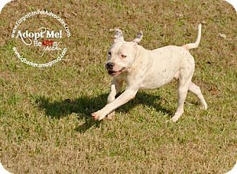 Kate Located At The Forgotten Pet Advocates In Pearland Texas