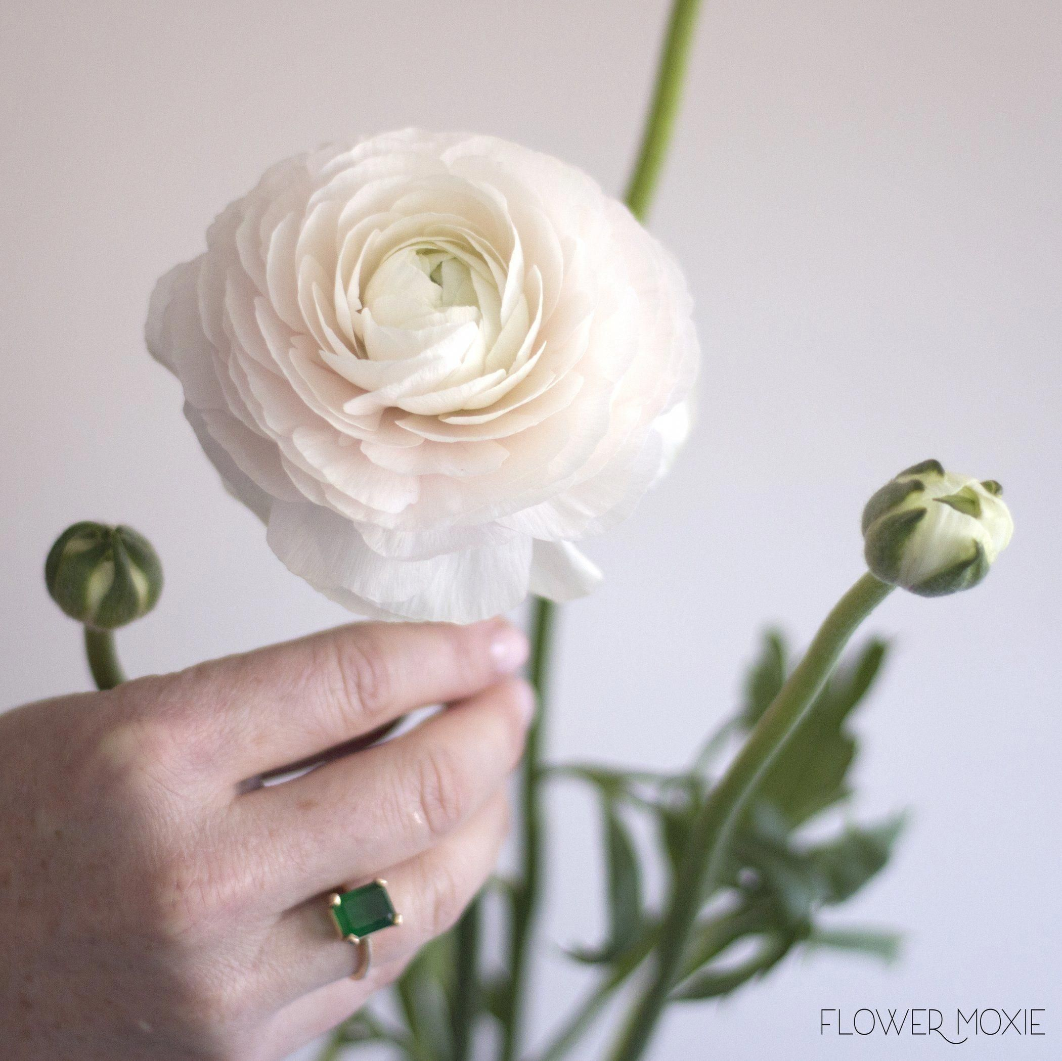 Ranunculus pink ranunculus wedding flowers diy flowers diy ranunculus pink ranunculus wedding flowers diy flowers diy wedding diy bride izmirmasajfo