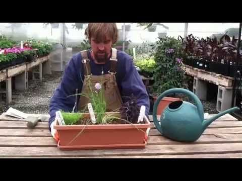 Maxfield's Guide to Container Gardening : #colorado #sustainable #soil #gardening #seeds #growyourownfood #maxfield's