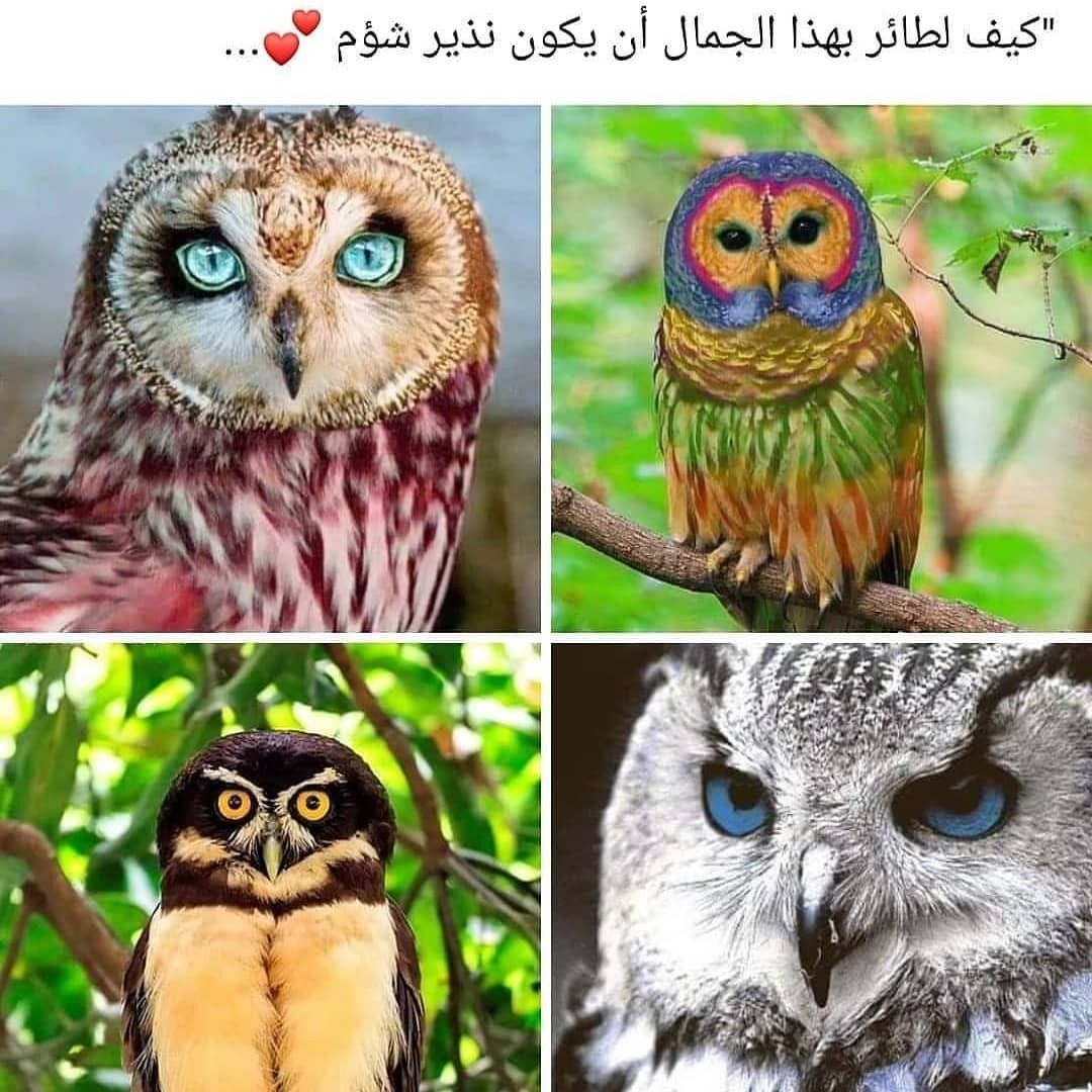 Discovered By أحمد الكوردي Find Images And Videos About ت ح ش ي ش بومه And البوم On We Heart It The Cute Piglets Cute Couple Wallpaper Drawings Of Friends