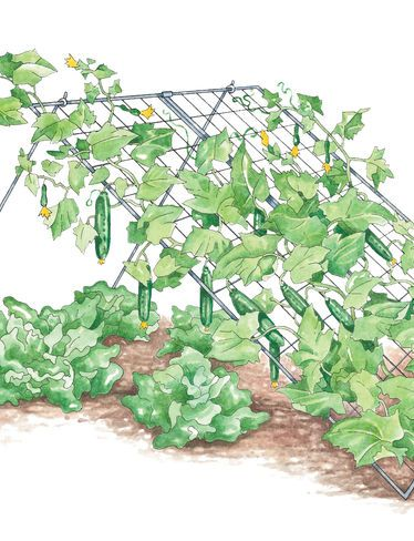 cucumber trellis for maggie to try next year should be easy to prop section of wire grid. Black Bedroom Furniture Sets. Home Design Ideas