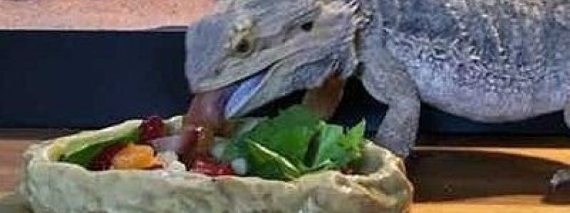 What Vegetables Do Bearded Dragons Eat