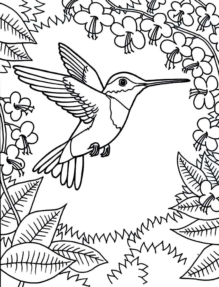 Printable Hummingbird Coloring