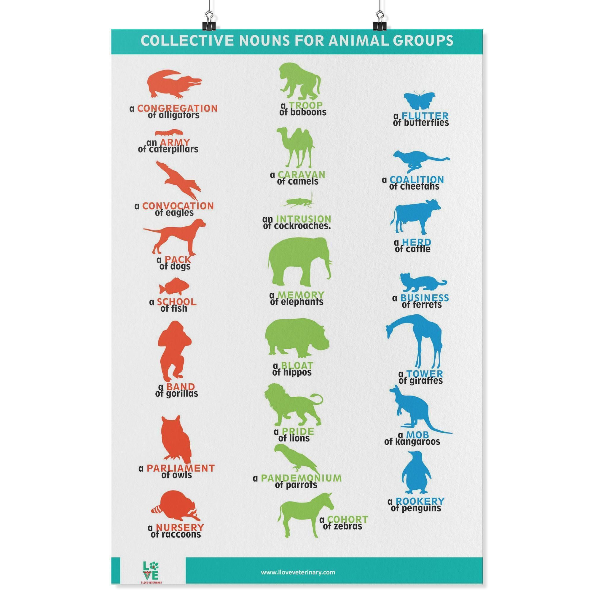 Collective Nouns For Animal Groups Poster