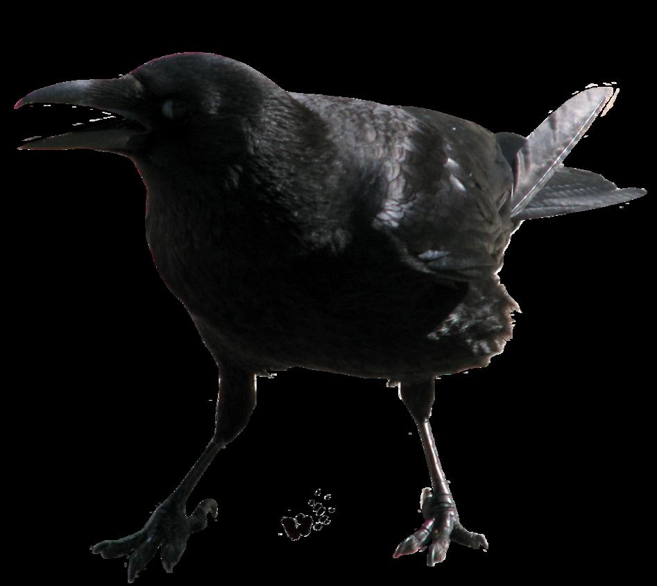Pin On Projekti Lintu
