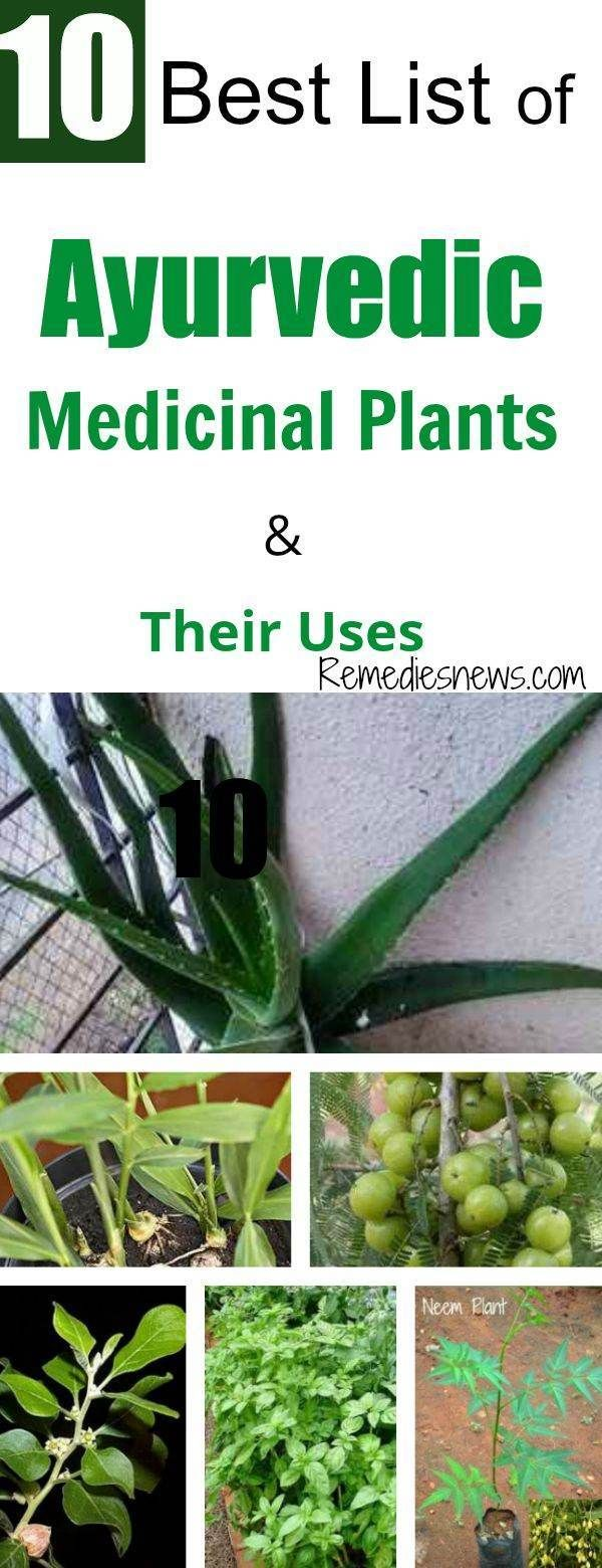 10 Best List of Ayurvedic Medicinal Plants and Their Uses 10 Best List of Ayurvedic Medicinal Plants and Their Uses