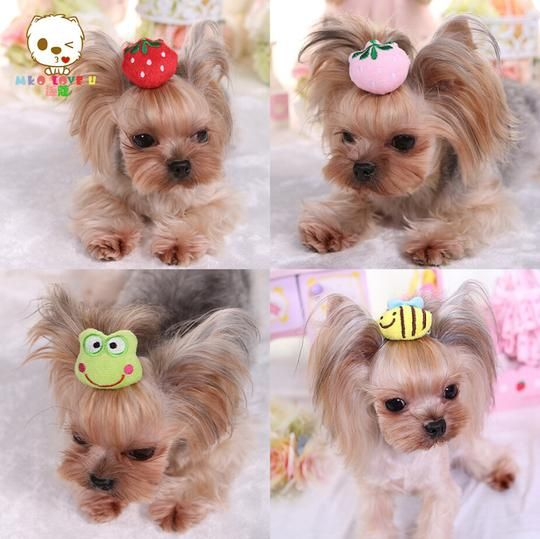 yorkie accessory 3d hair accessories for yorkies yorkie addiction 9066