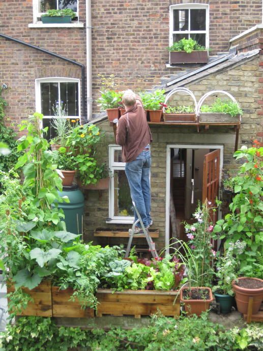 Picking salad growing in pots