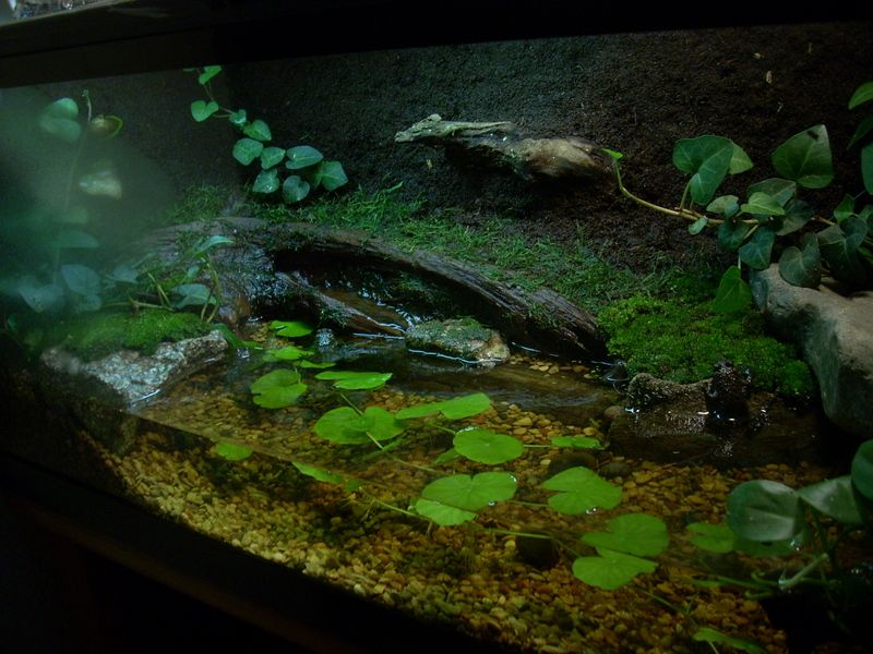 My redesigned Fire bellied toad setup | Terrariums ... 10 Gallon Dart Frog Vivarium