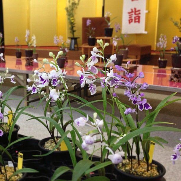 8月12日に発売した『趣味の山野草9月号』に、6月29、30日に当八幡宮を会場にして行われた『羽蝶蘭展(主催:山形みちのくウチョウラン会)』の様子が掲載されました。