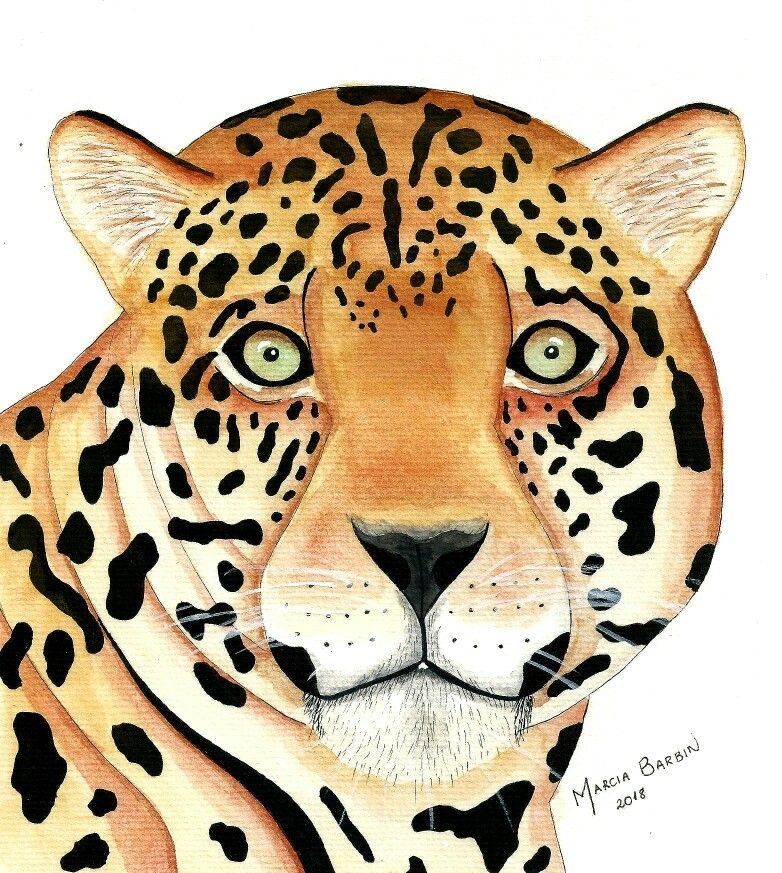 Onca Pintada Aquarela Watercolor Art Desenho Illustration