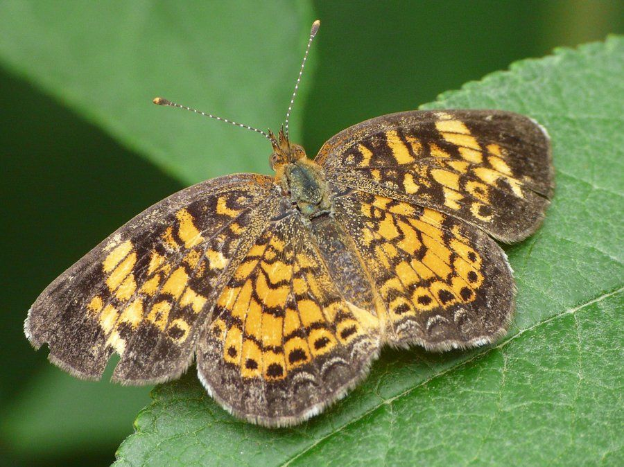 Butterflies are beautiful, flying insects with large scaly