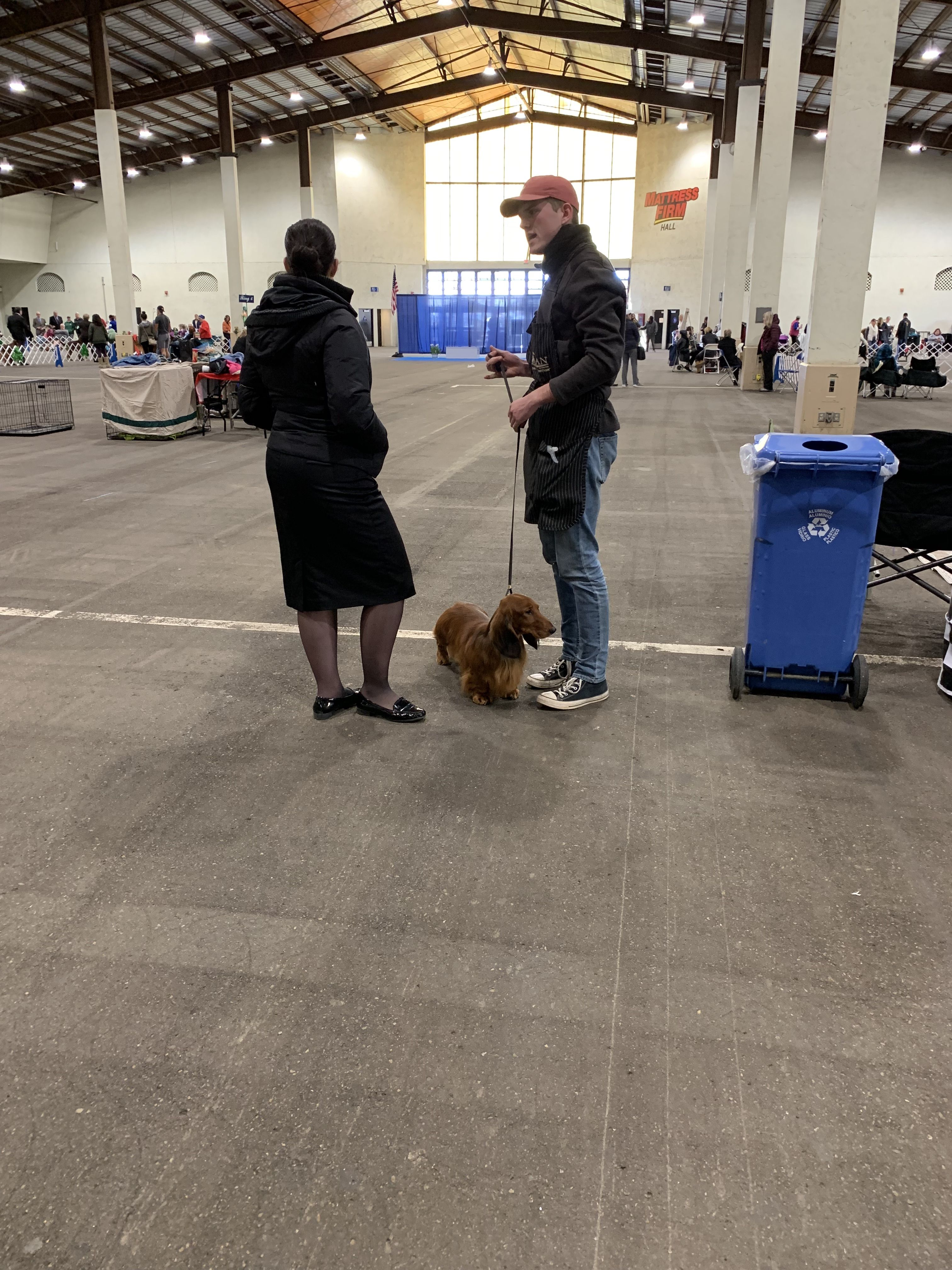 Long Haired Dachshund Ringside Akc All Breed Dog Show Silver Bay
