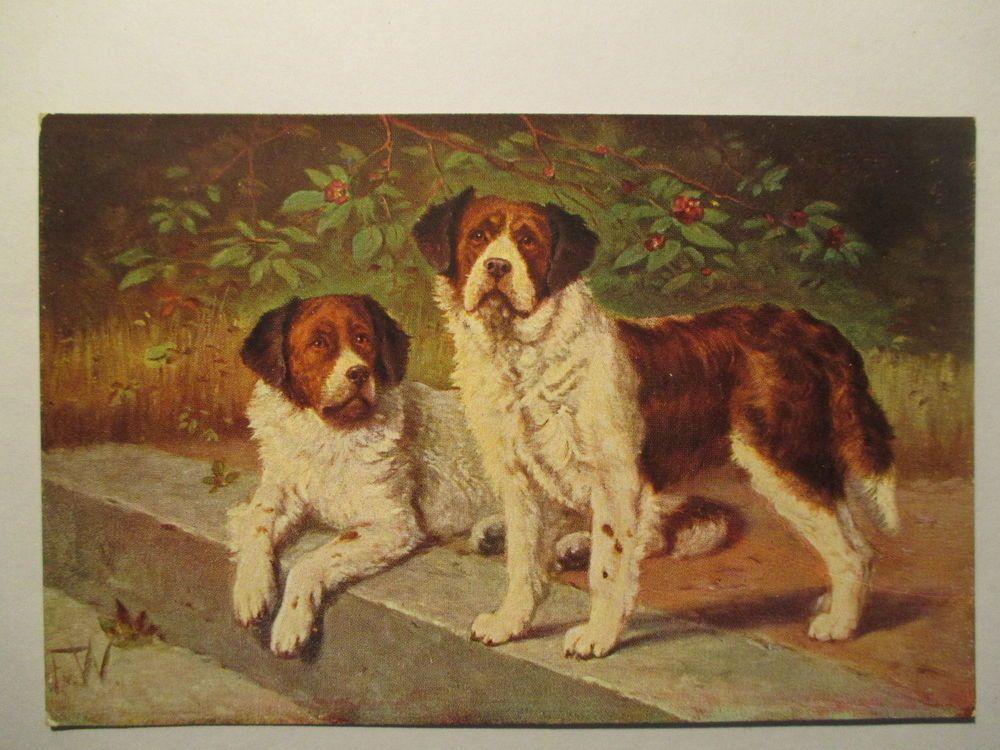 alte Ansichtskarte  Tier Hund, Dog , Bernhardiner um 1910