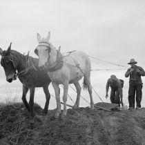 Getting the ground ready for spring planting, North Carolina. 1936 by Carl Mydans