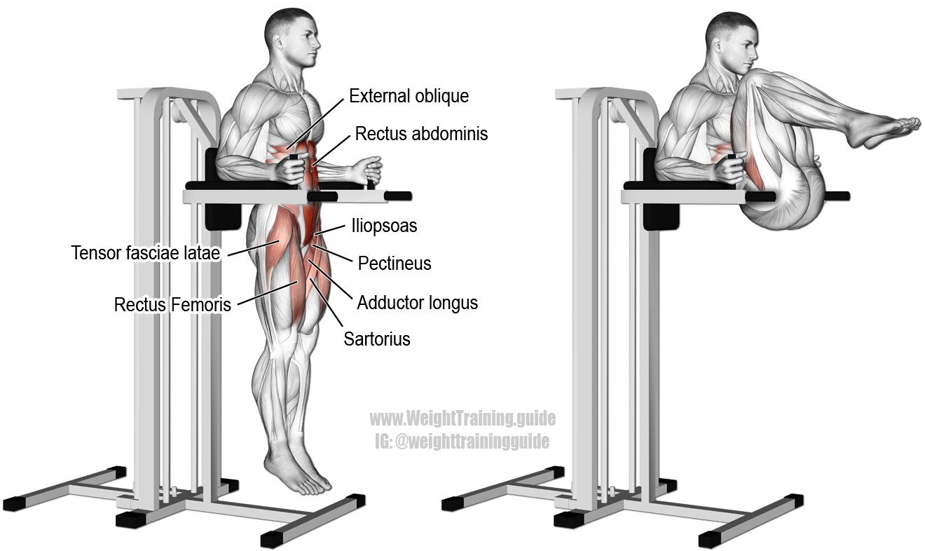 Captains chair leg raise - Captain S Chair Leg And Hip Raise A Compound Hip And Waist Flexion Exercise Target