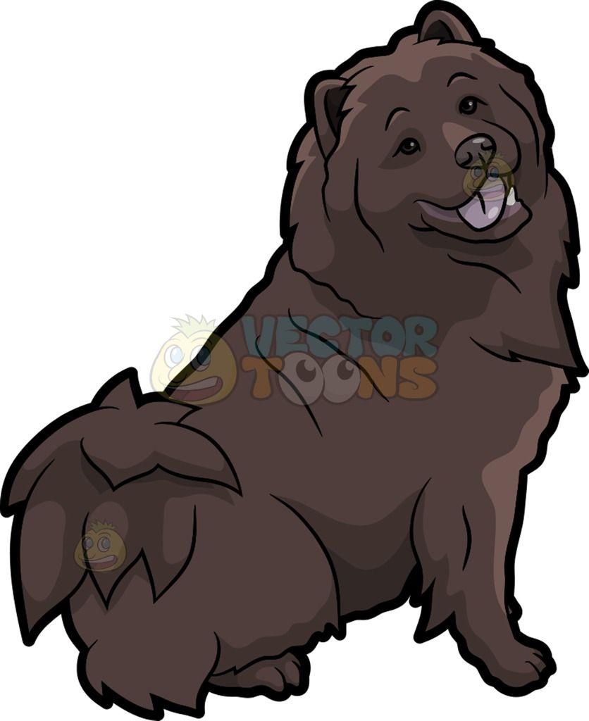 A Pretty Chocolate Brown Chow Chow Dog Cartoon Dog Chow Chow