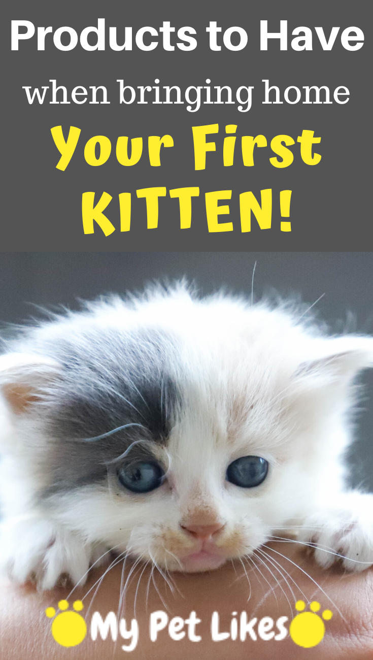 10 Must Haves When Bringing Home A New Cat Or Kitten Cat Illnesses Cats Cat Diseases