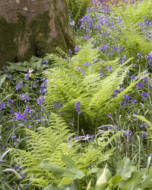 Wald Frauenfarn Gardens And Landscaping Farne Garten
