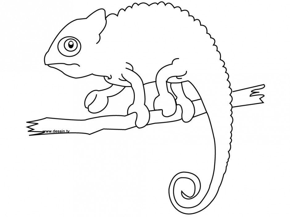 Chameleon Coloring Pages Coloring Pages Amp Pictures Imagixs