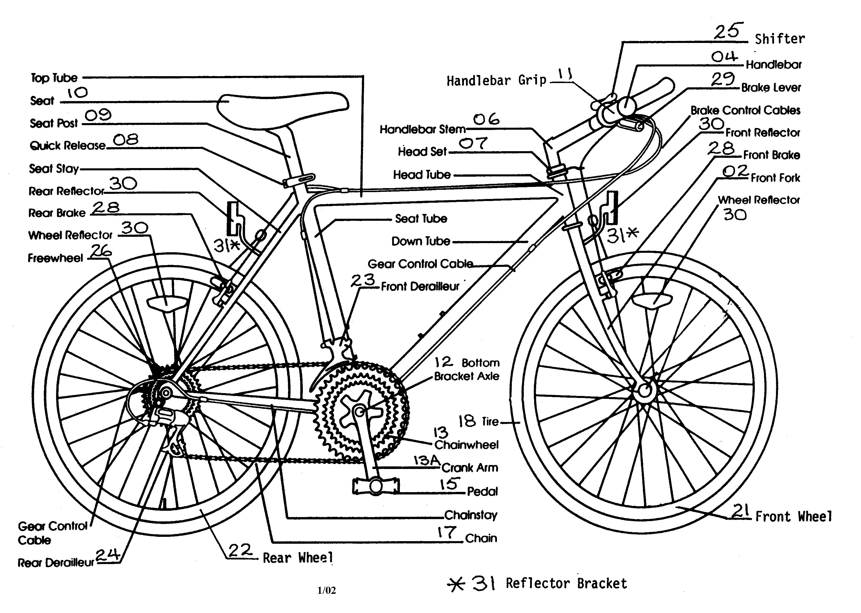 Groß Fahrrad Anatomie Diagramm Zeitgenössisch - Anatomie Von ...