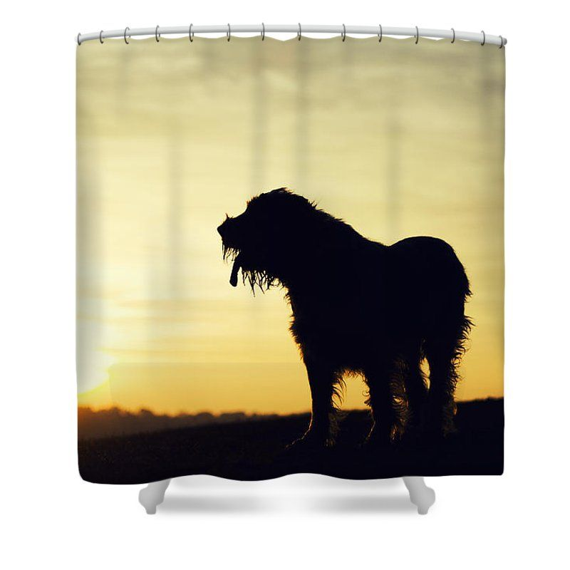 Brown Roan Italian Spinone Shower Curtain