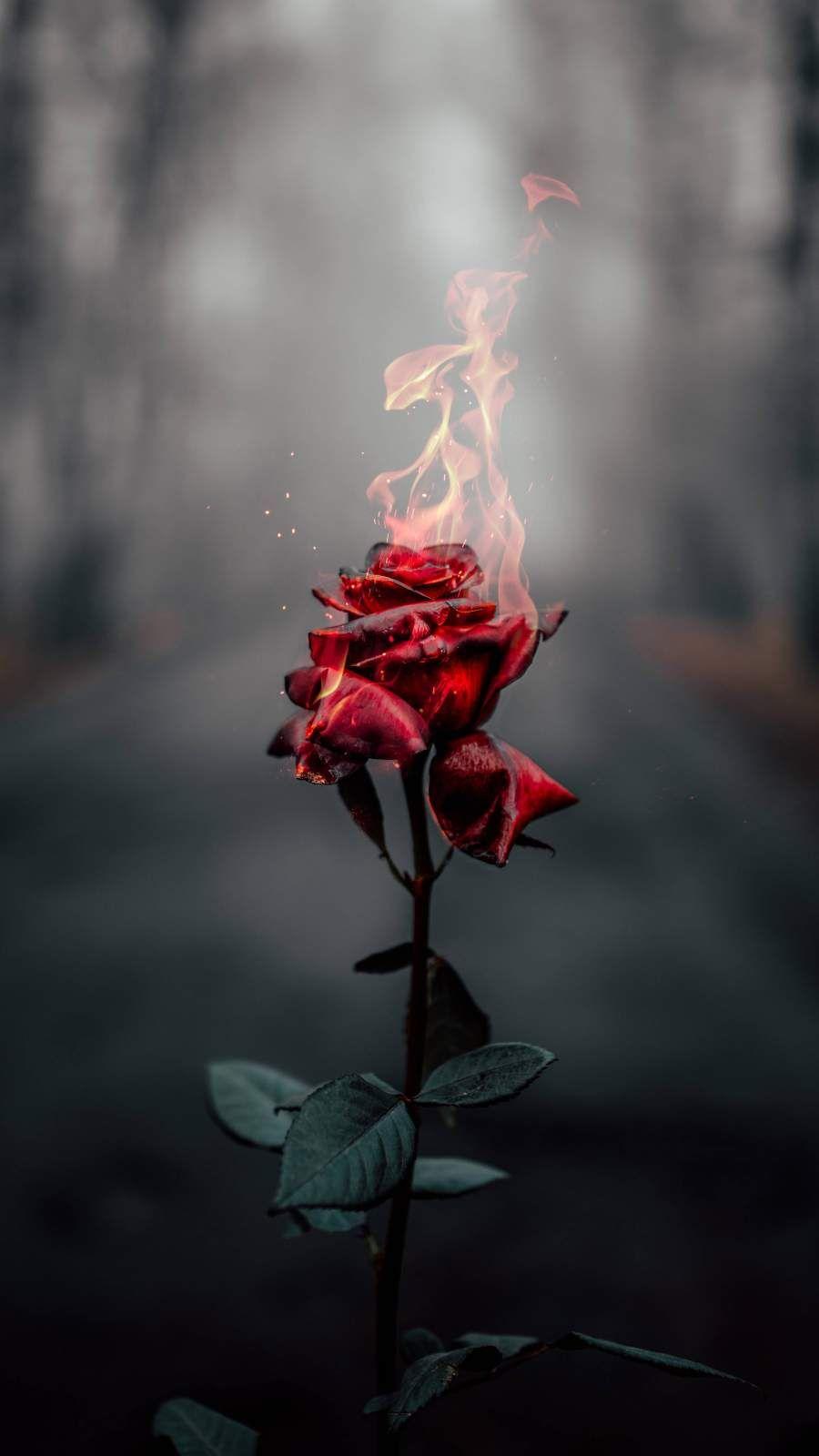 Burning Rose Iphone Wallpaper Nature Photography Photography Wallpaper Fire Photography