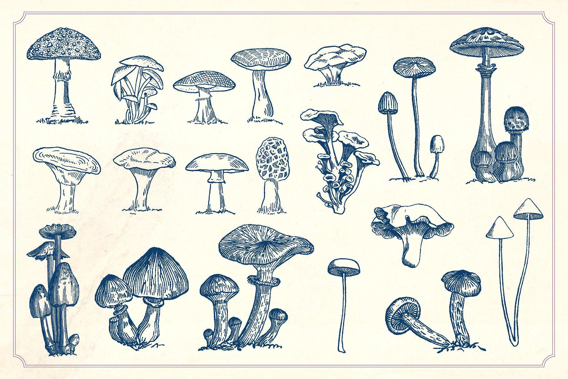 Vintage Mushrooms Fungi Vintage Mushroom Mushroom Drawing Stuffed Mushrooms