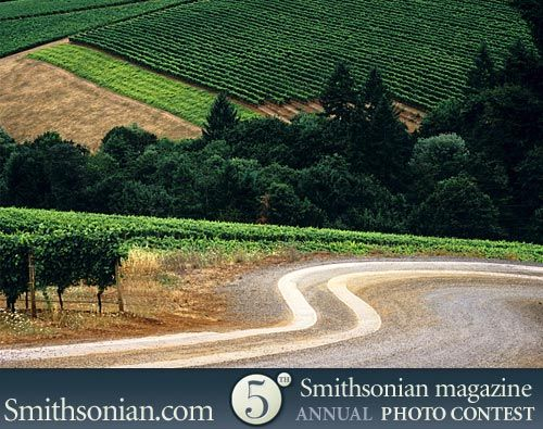 A vineyard road in Willamette Valley