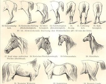 Image result for horse body language also  ideas pinterest rh