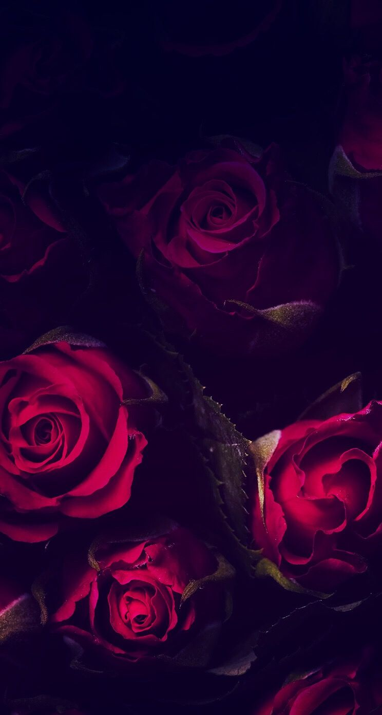 Wallpaper wallpaper rose wallpaper flower wallpaper - Gothic wallpaper for phone ...