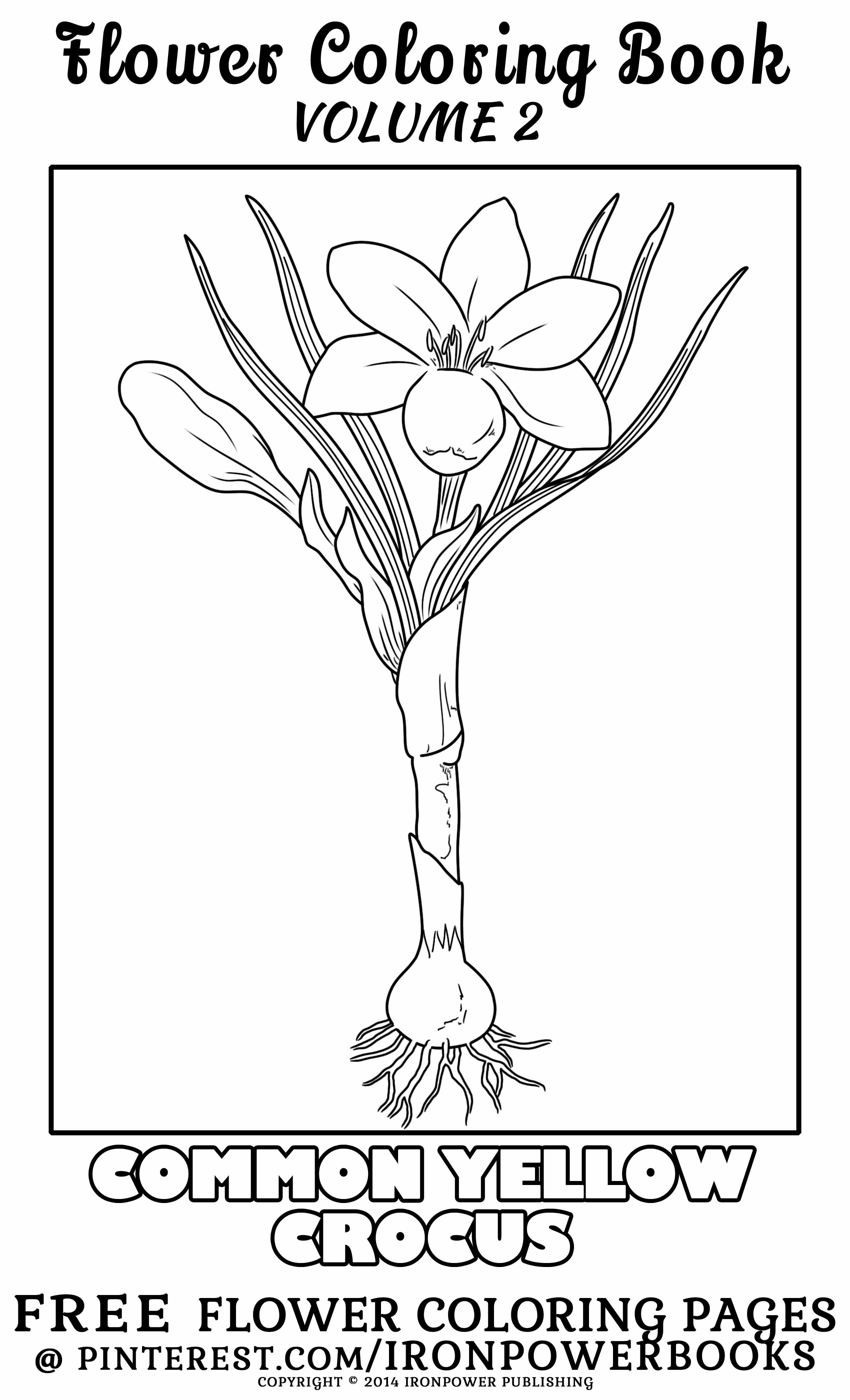 Flower Coloring Page For Kids And Adults This Is From The Book
