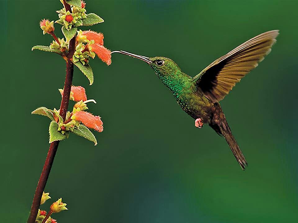 Humming bird beauty