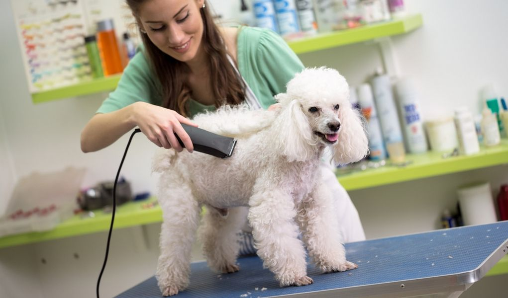20 Best Dog Grooming Books For Beginners Intermediates And Total Pros Dog Grooming Clippers Dog Groomers Dog Clippers