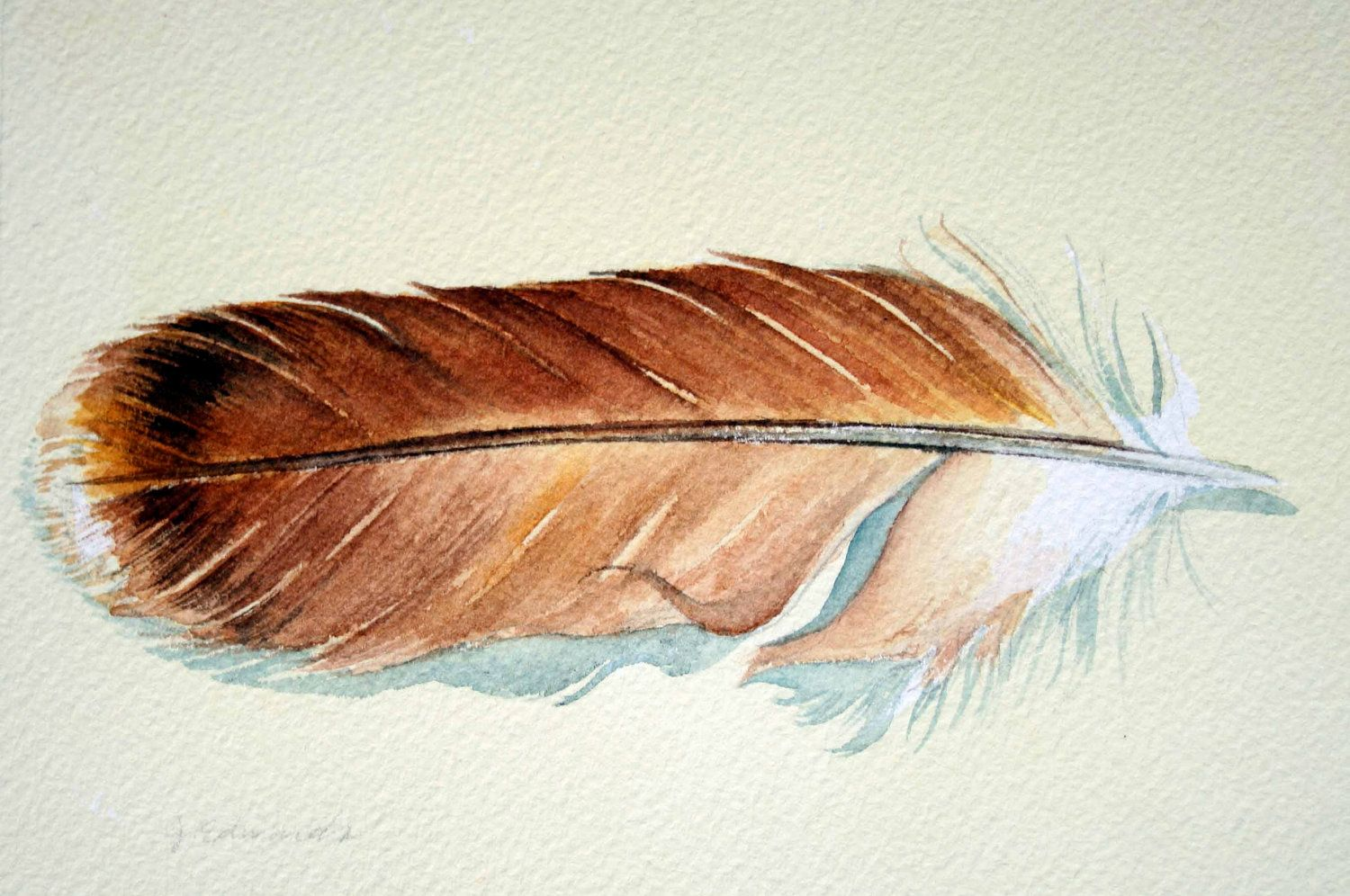 Red tailed hawk feather tail feather sketch tattoo idea tattoo