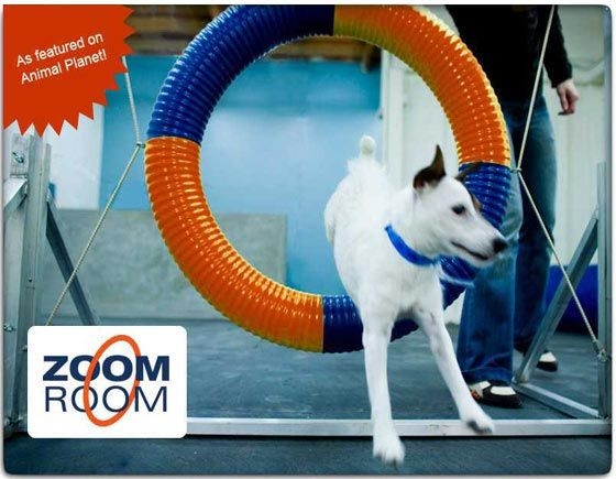 Zoom Room Dog Facilities Agility Training Classes Rental Space