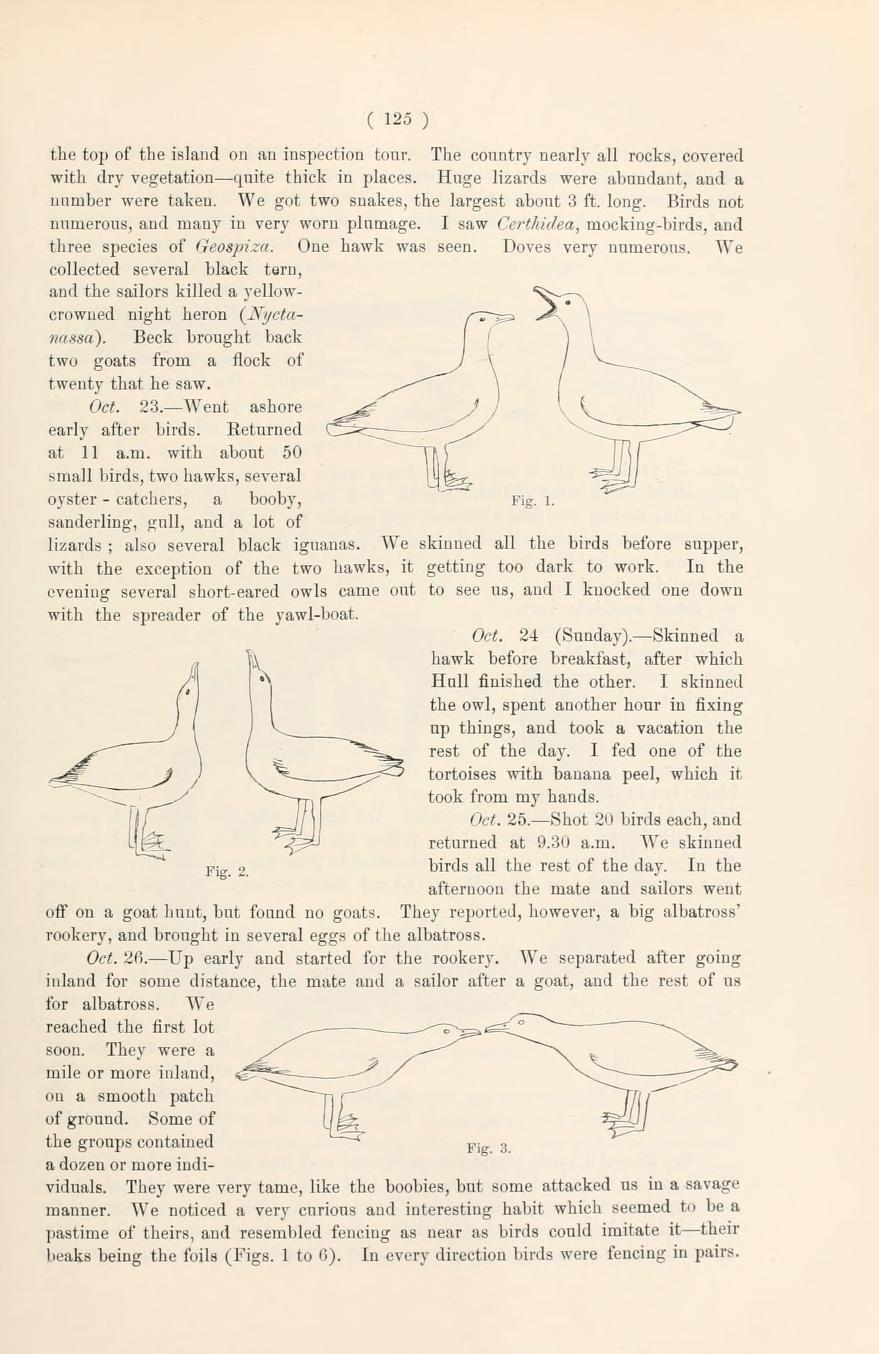 Albatross courtship.  Novitates Zoologicae