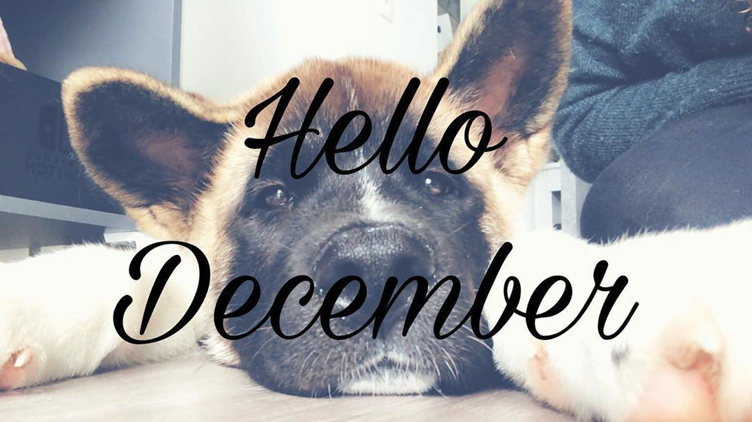 Bonjour les copains  jespère que vous allez bien ? Nous sommes le 1er Décembre ce qui veut dire bientôt Noël  le t... #bonjourdecembre Bonjour les copains  jespère que vous allez bien ? Nous sommes le 1er Décembre ce qui veut dire bientôt Noël  le t... #bonjourdecembre Bonjour les copains  jespère que vous allez bien ? Nous sommes le 1er Décembre ce qui veut dire bientôt Noël  le t... #bonjourdecembre Bonjour les copains  jespère que vous allez bien ? Nous sommes le 1er Décembre ce #bonjourdecembre