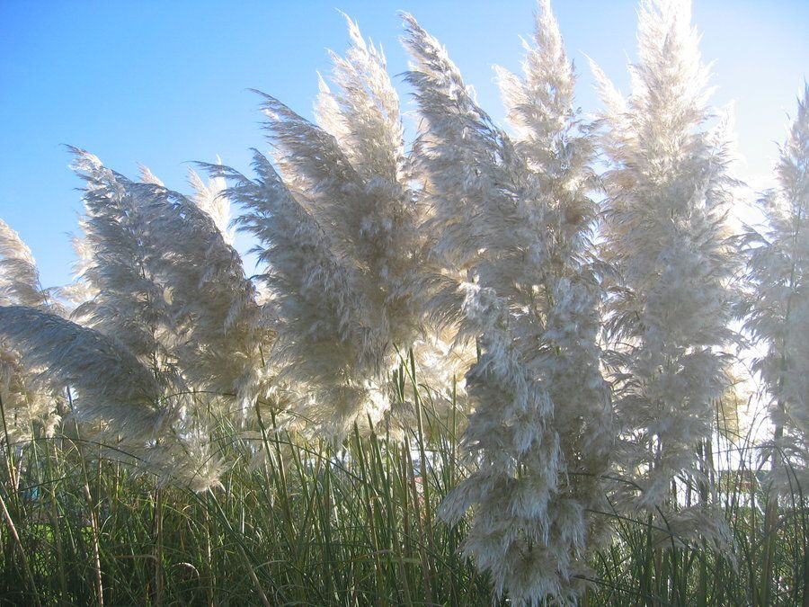 Mississippi Feathers Plants Look