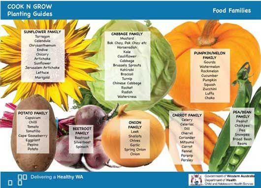 Plant families for crop rotation cookngrow blog veg patch garden also best images potager vegetable rh pinterest