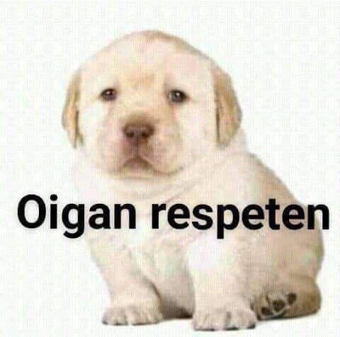 Pin By Romina On Memes Del Perro Memes New Memes Cartoon Memes