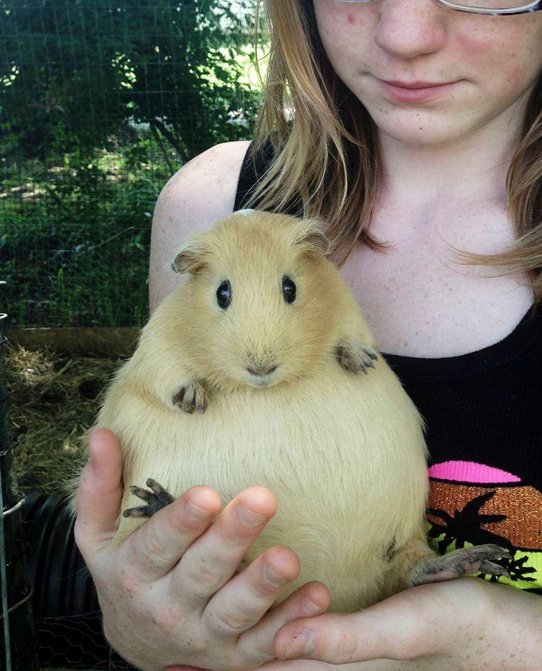 Fat guinea pig names